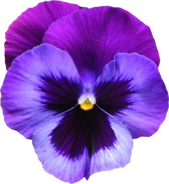 Craft · Large Transparent Purple Violet Flower PNG Clipart