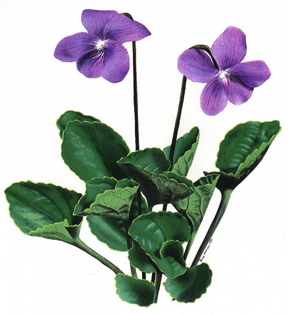 violet flower clip art 6 diy crafts inspiration pinterest
