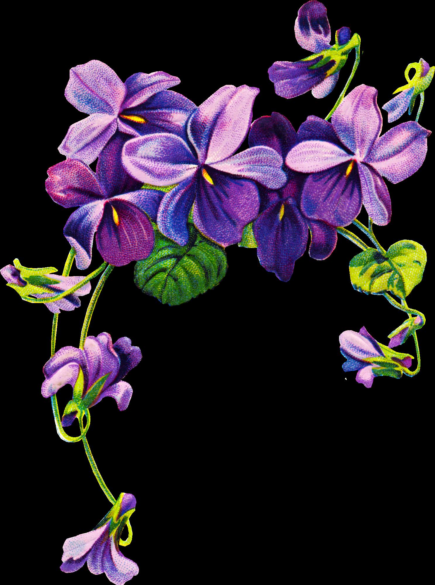 Violets Vintage Clipart