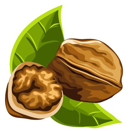 Solid Brown Strong Delicious Ripe Walnut-Solid brown strong delicious ripe walnut, vector isolated-5