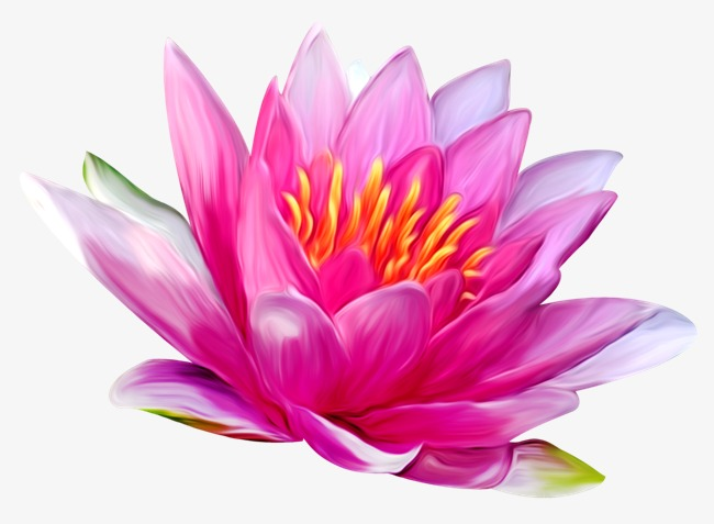 hand-painted purple water lily, Hand Painted, Purple, Water Lilies PNG Image