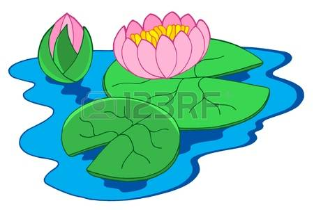 Pink water lilies - vector illustration.