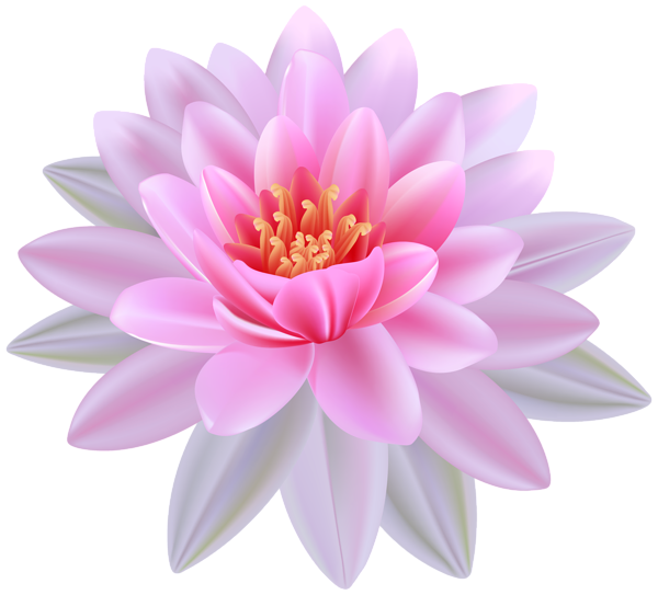 Pink Water Lily PNG Clipart Image