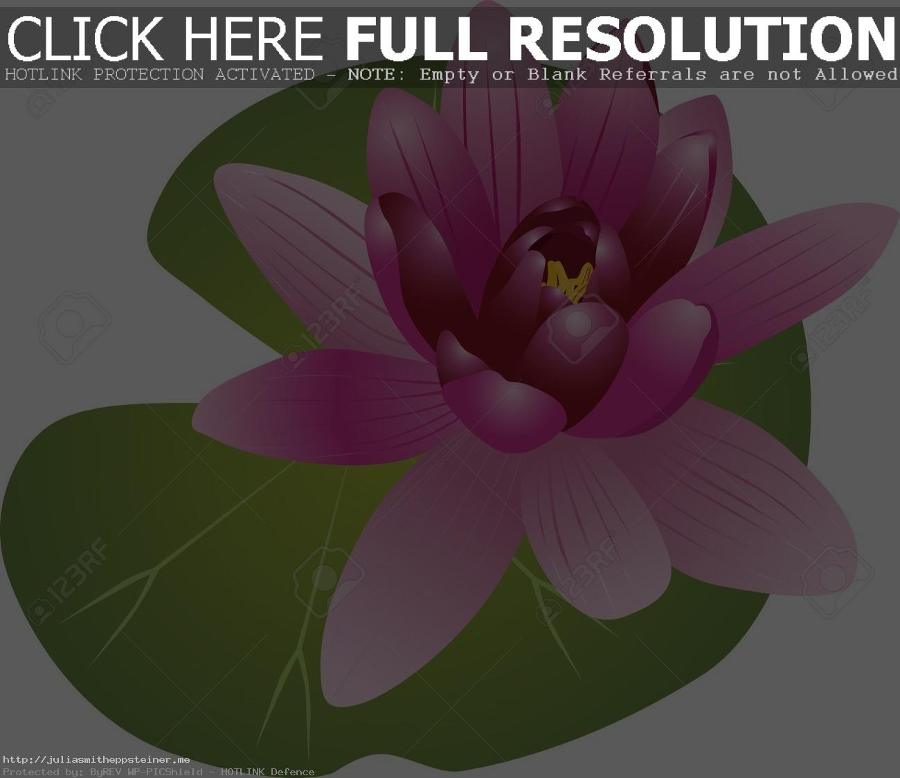 Water Lily Clipart 3 Station