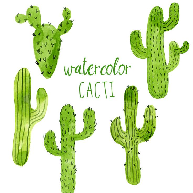 Watercolor Cacti, Digital Cactus Clip Ar-Watercolor Cacti, Digital cactus clip art, Western clipart, Trend Clip Art, Green-19