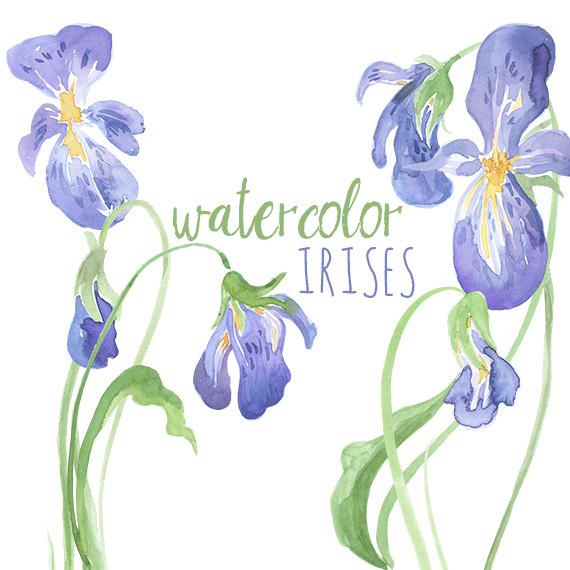Watercolor Irises Clip Art, Iris artwork-Watercolor Irises Clip Art, Iris artwork, Watercolor Iris, Digital Easter graphics, Easter-19