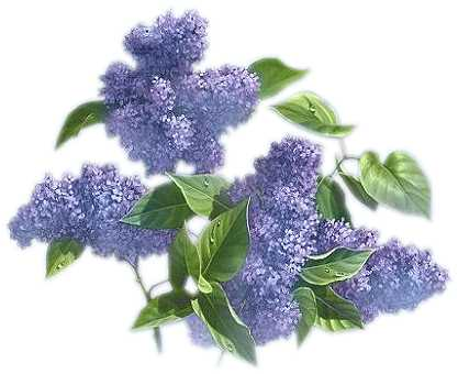 Watercolor Lilacs Clip Art Spring Florals by DigitalPressCreation. clipartflowerslilac