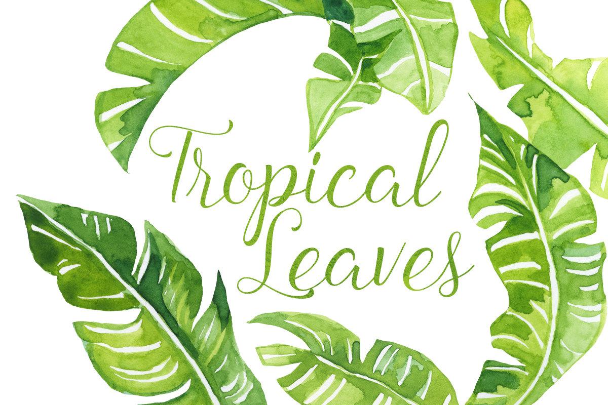 Watercolor Tropical palm Leaves Clip Art-Watercolor Tropical palm Leaves Clip Art, Tropics clipart, polynesian clipart, Hawaiian Illustration, Beach Clip Art, Banana Leaves Clipart-16