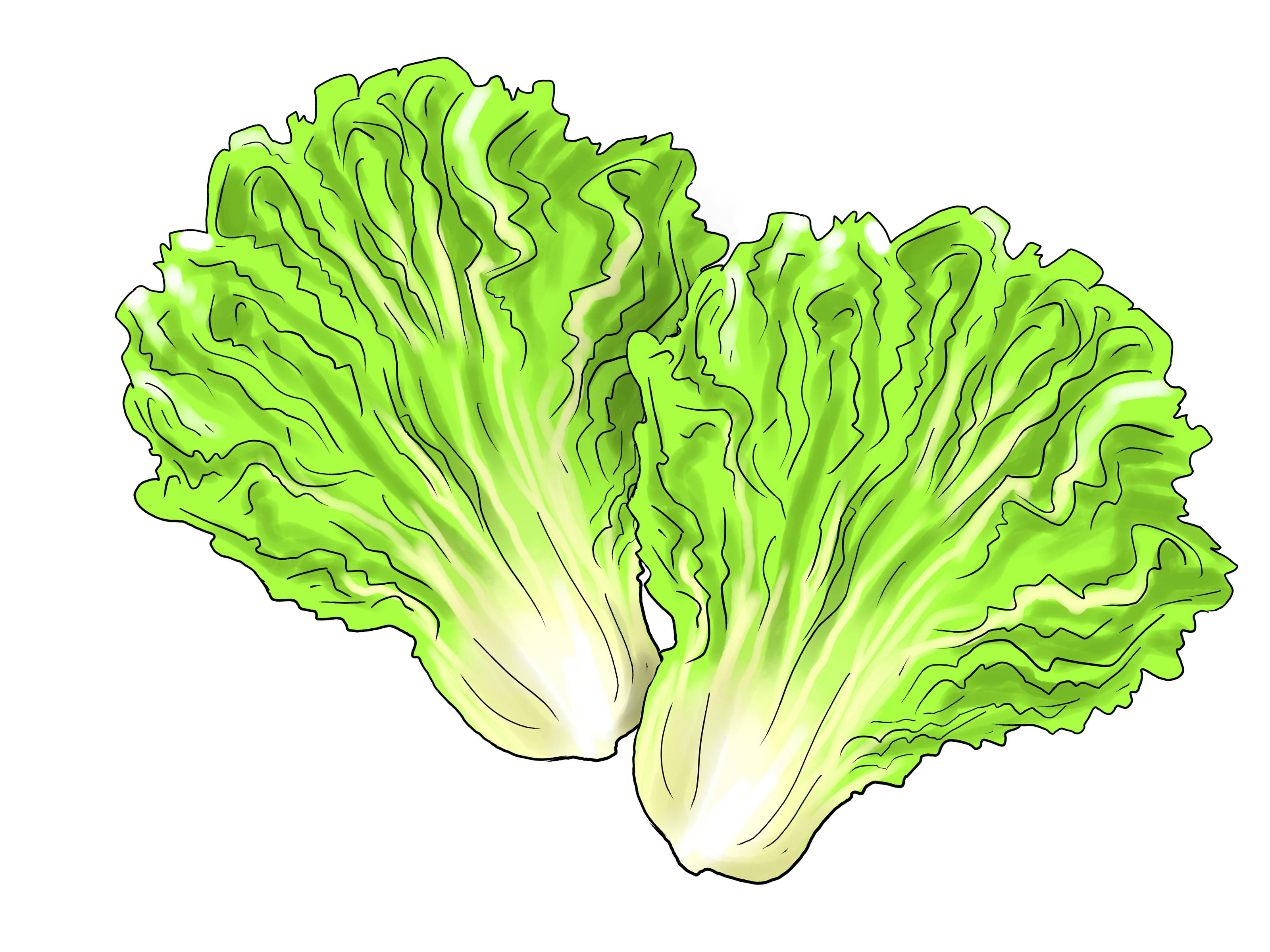 Ways To Grow Lettuce Indoors Wikihow-Ways To Grow Lettuce Indoors Wikihow-19