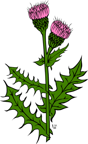 Weed With Pink Buds Clip Art At Clker Com Vector Clip Art Online