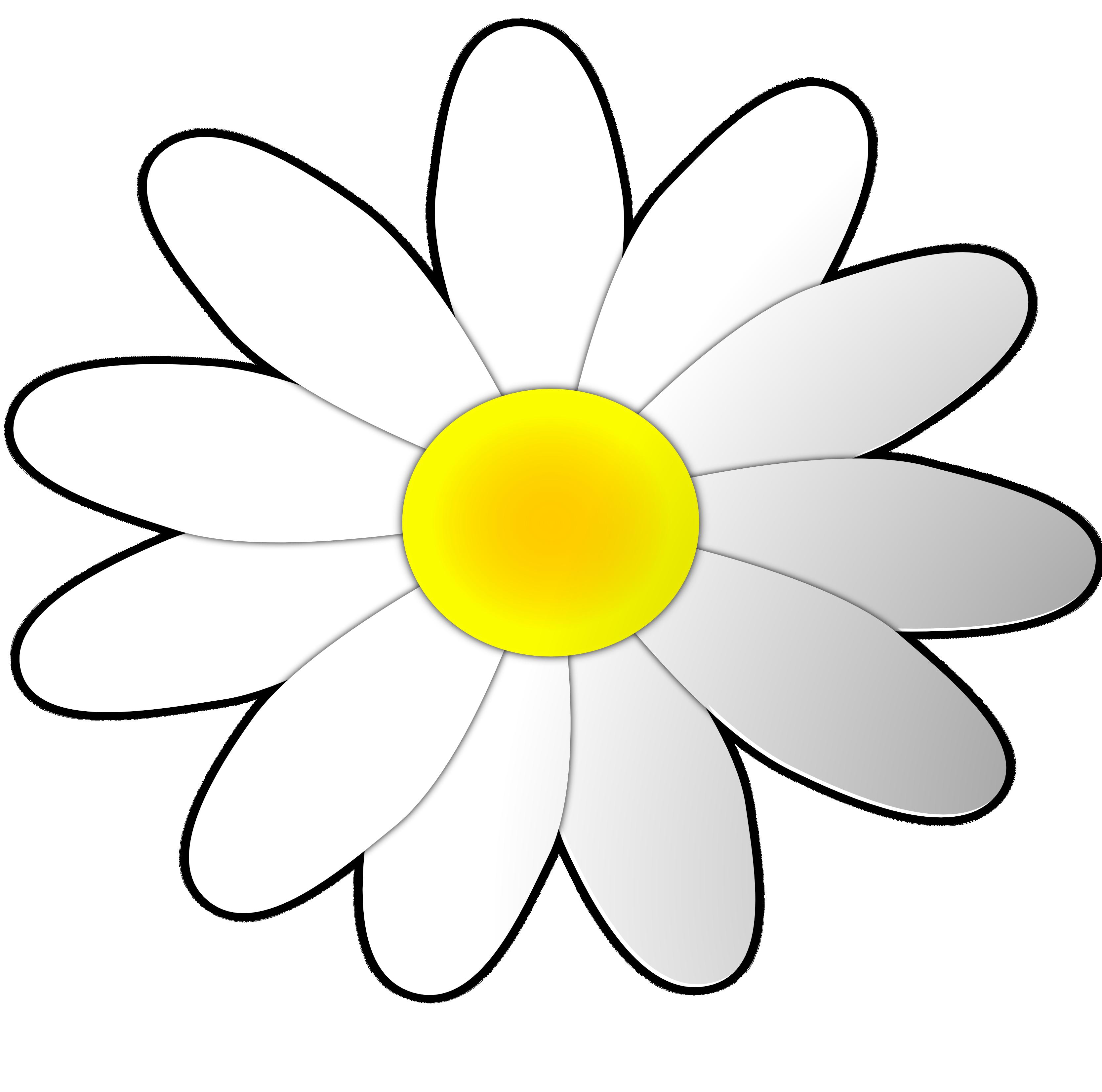 White daisy flower clipart ...