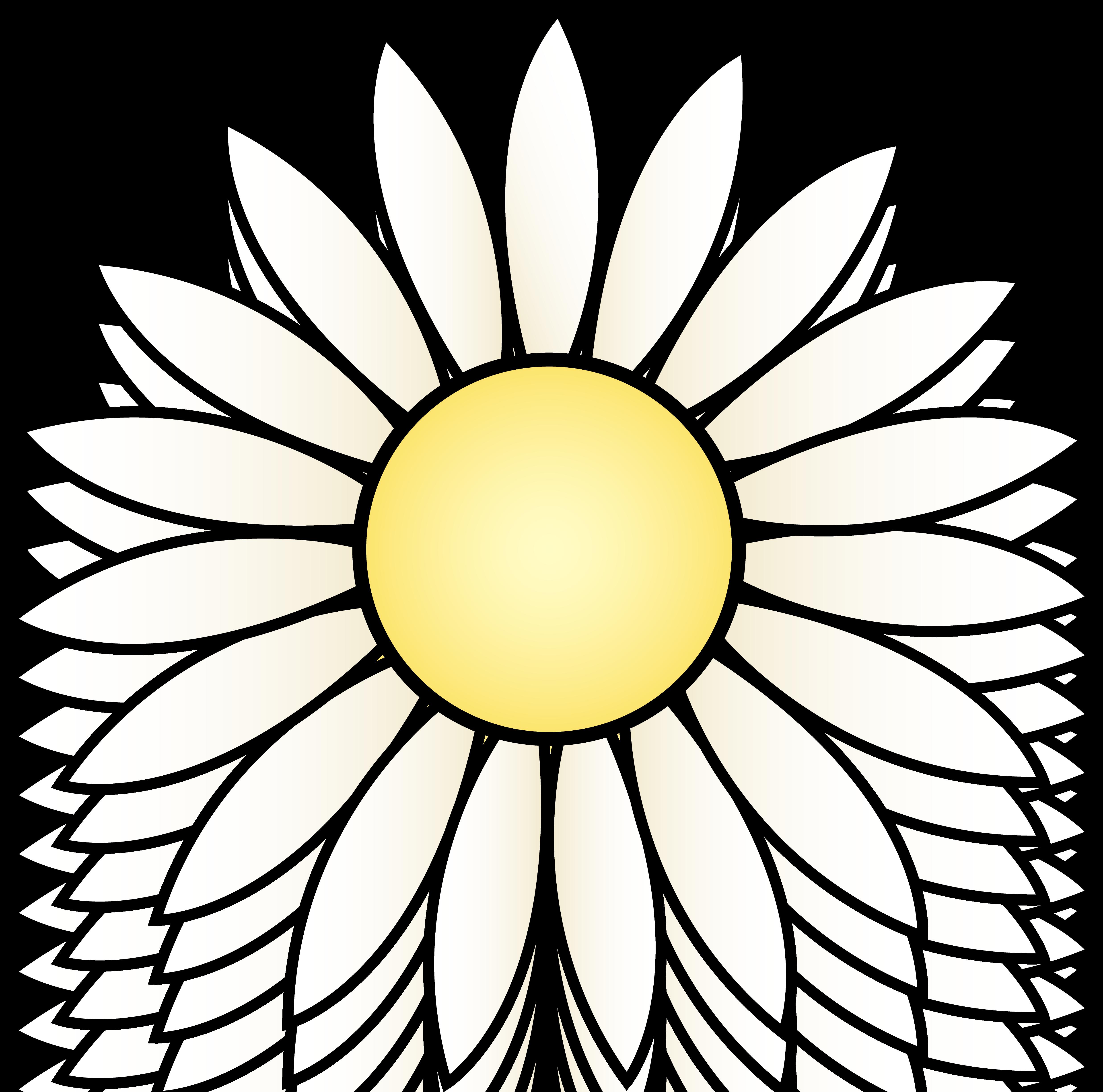 White Daisy Flower - Free Clip Art
