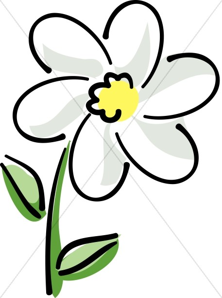 White Daisy with Yellow - White Flower Clipart