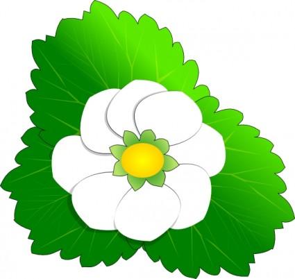 White Flower Clip Art Free Vector For Fr-White flower clip art Free vector for free download (about 146 files).-11