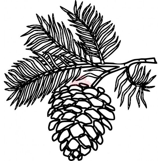 White Pine Cone Drawing Clip art pine cone clipart panda - free clipart  images