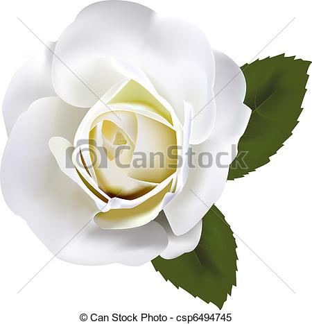 Beautiful white rose - csp6494745