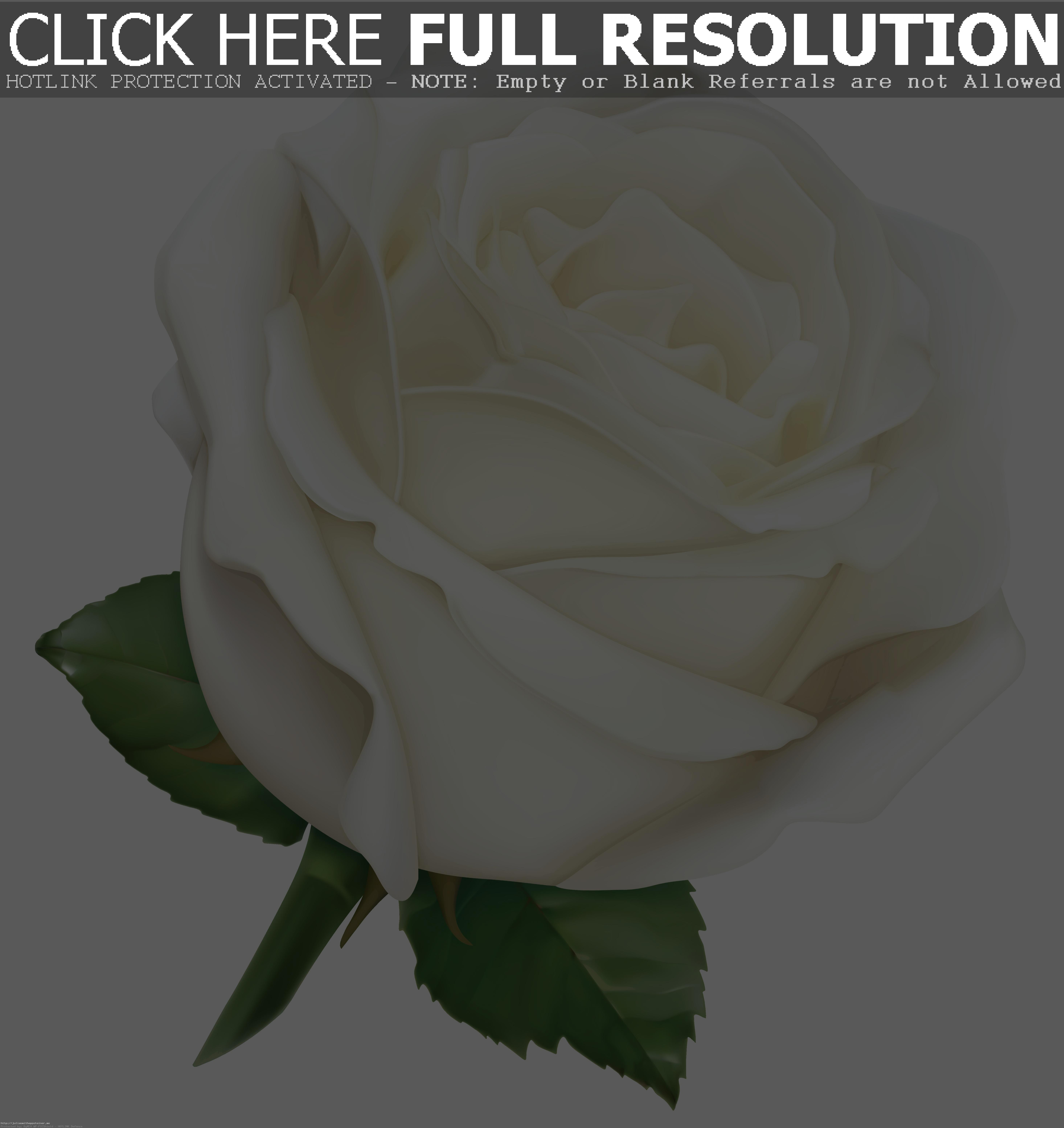 . ClipartLook.com Large White Rose PNG C-. ClipartLook.com Large White Rose PNG Clipart Image Gallery Yopriceville High ClipartLook.com -6