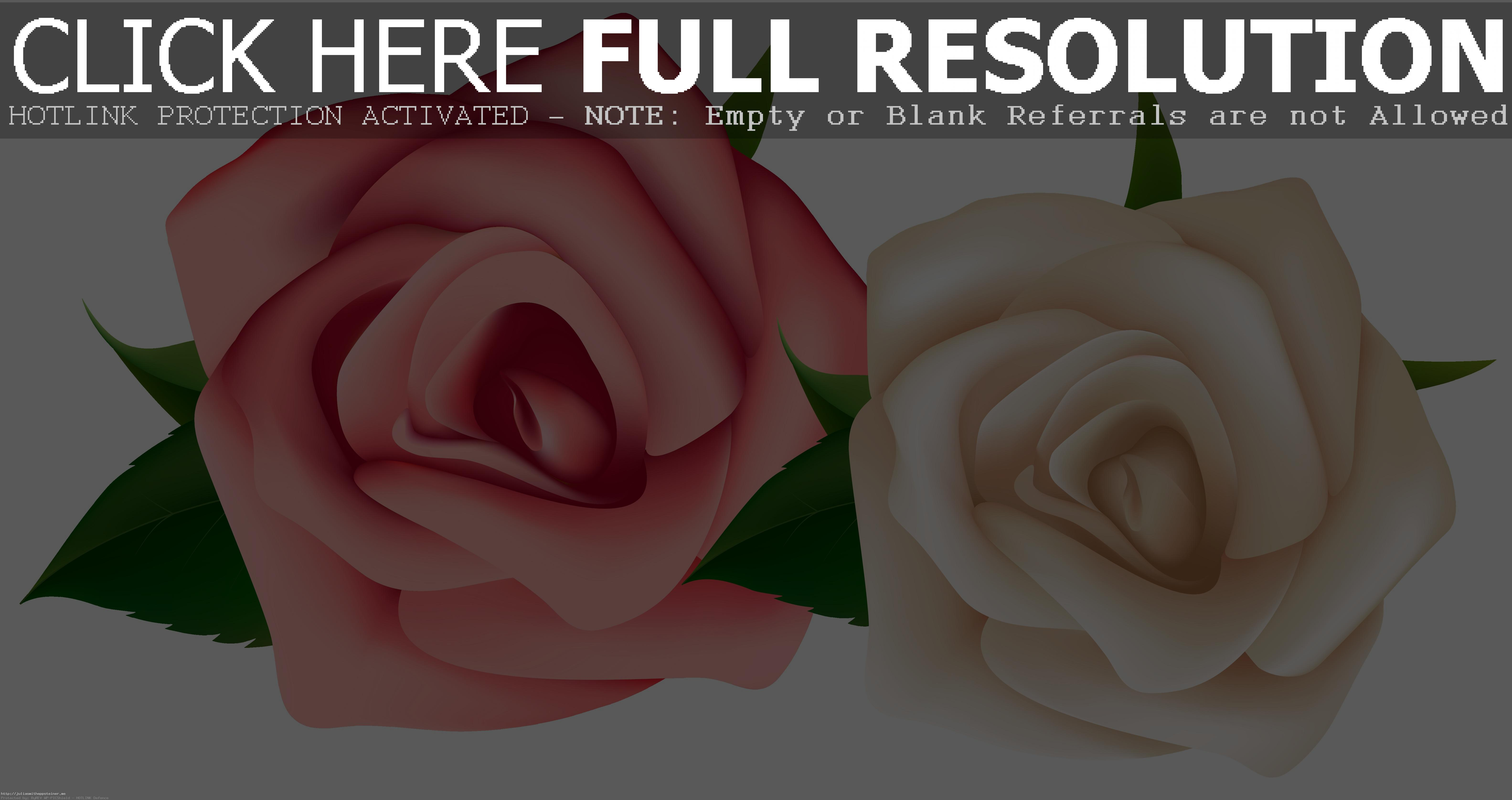 Red And White Roses Clipart PNG Image Ga-Red And White Roses Clipart PNG Image Gallery Yopriceville High Arresting  Rose-8