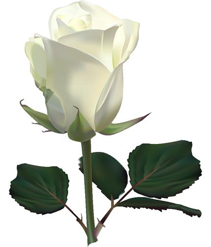 Дневник spaich/zelenvik/ Виктор Добрин : LiveInternet - Российский Сервис  Онлайн-Дневников. Flower ClipartRose ClipartLook.com