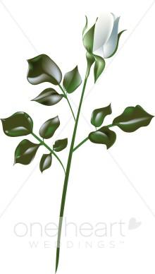 White Rose Clipart