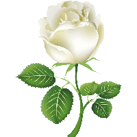 White Rose Png Image Flower W - White Rose Clipart