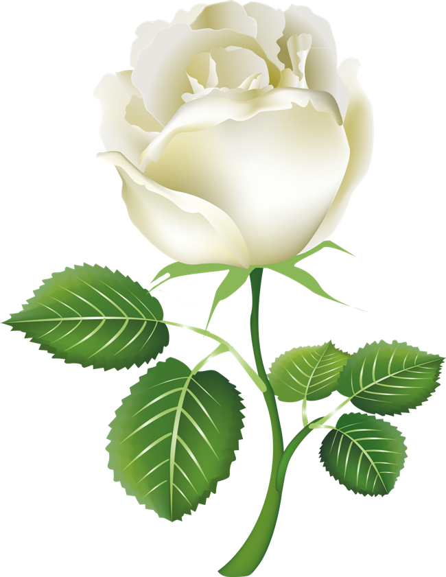 White Rose Png Image Flower White Rose Png Picture White Rose Png