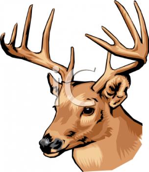 Whitetail Deer Clip Art-Whitetail Deer Clip Art-15