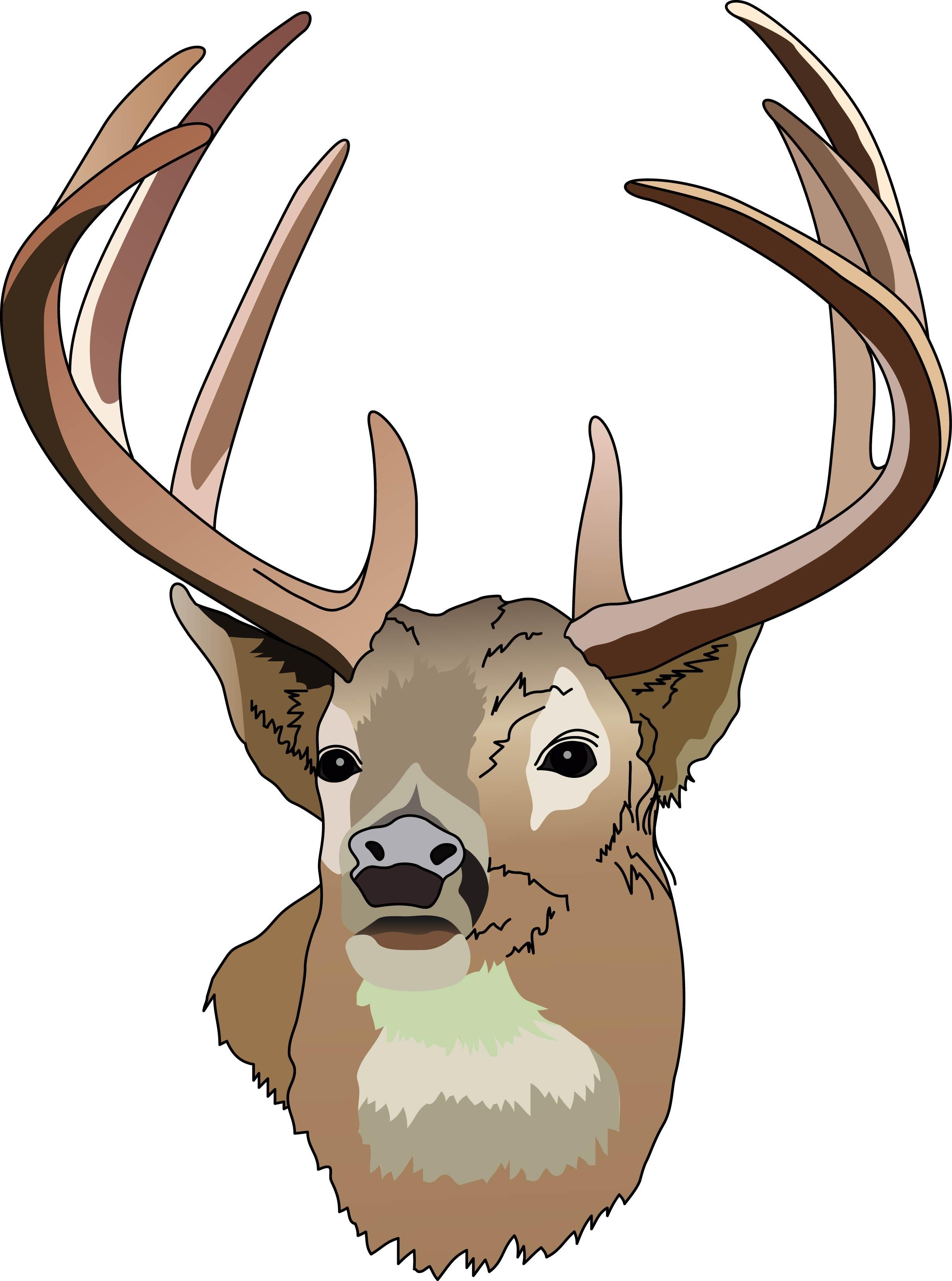 Whitetail Deer Clipart-Whitetail Deer Clipart-16