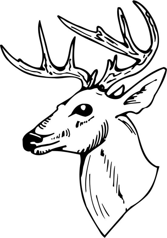 Whitetail Deer Clipart U0026middot; Buck-Whitetail Deer Clipart u0026middot; buck clipart u0026middot; bet clipart-19
