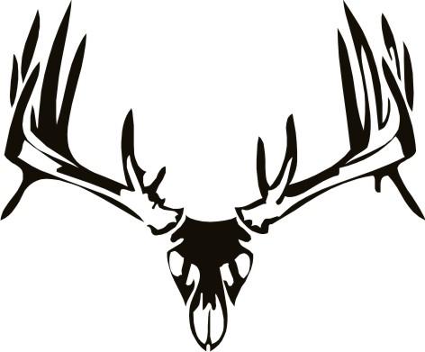 Whitetail Deer Skull Drawings