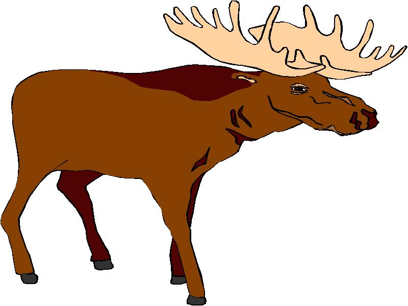 Wild Animals Clip Art Download. bcs.