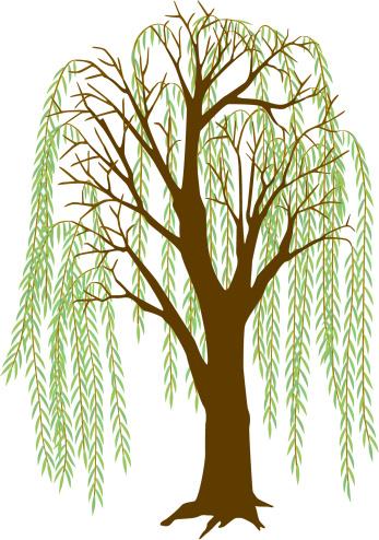 Willow Tree vector art .