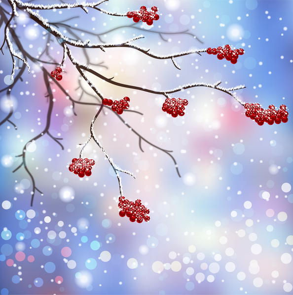 winter scenes with branch and red fruit-winter scenes with branch and red fruit-17