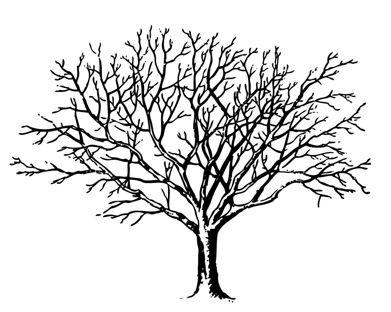 Winter Tree Clipart Winter Tree Clipart -Winter Tree Clipart Winter Tree Clipart Winter Tree Clipart Winter-18