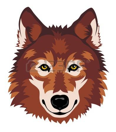 wolf face: Abstract vector illustration of wolf head in front