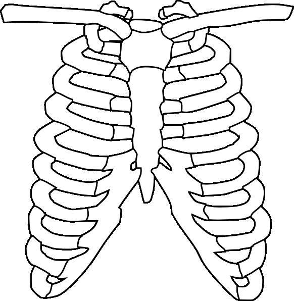 x-ray clipart