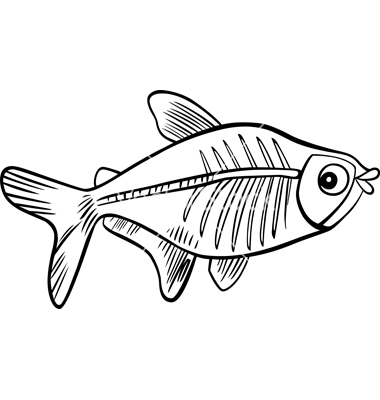 X Ray Tetra Clipart. Xrayfish .