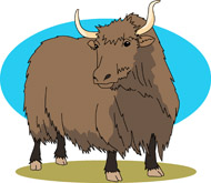 ... Yak bull - cartoon illust