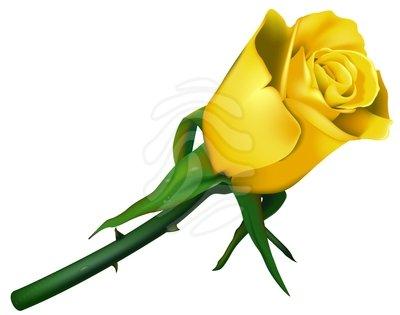 yellow rose border clip art-yellow rose border clip art-10