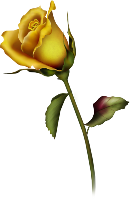 Yellow Rose Clip Art Cliparts .