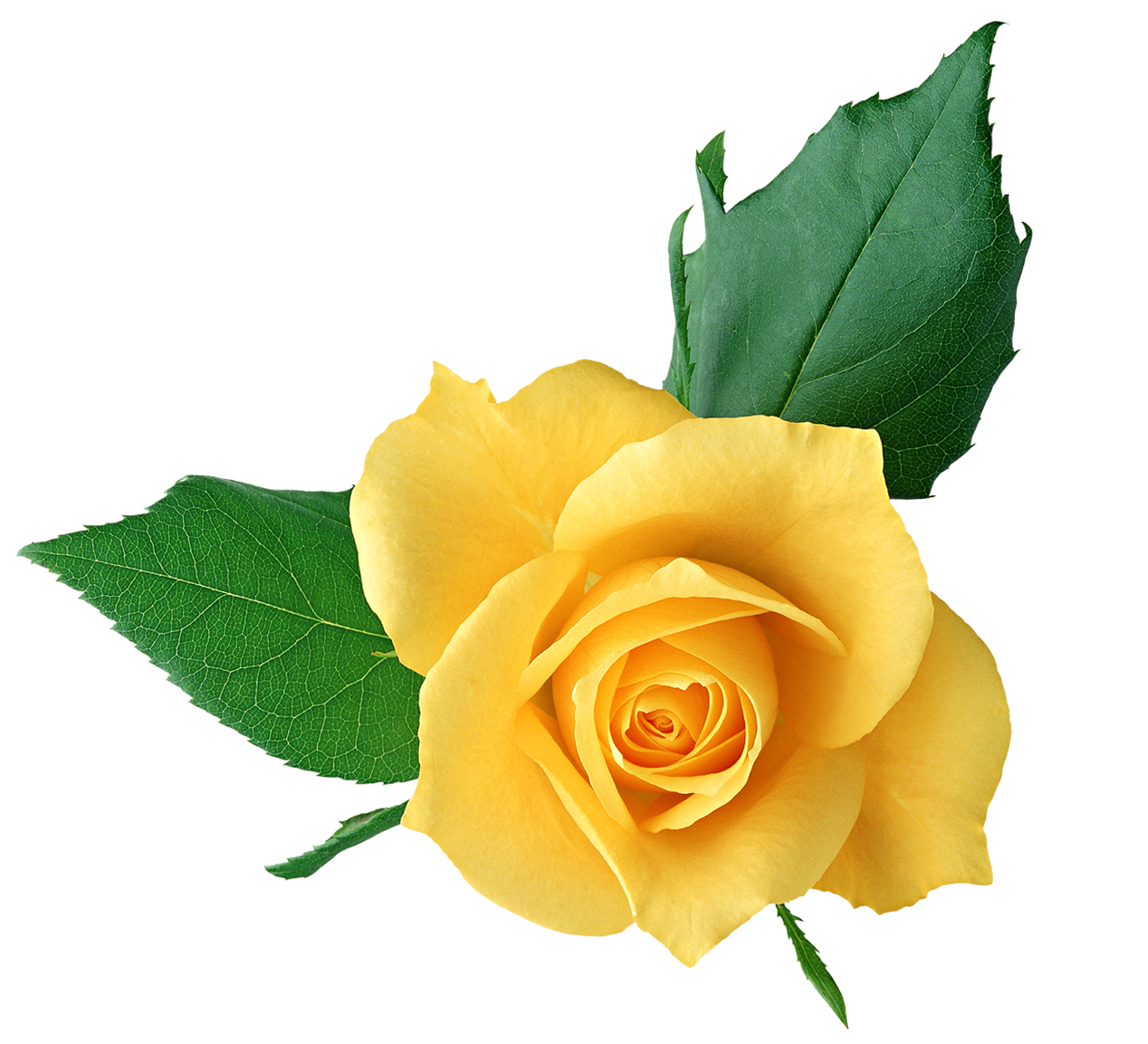 Yellow Rose Clip Art-yellow rose clip art-9