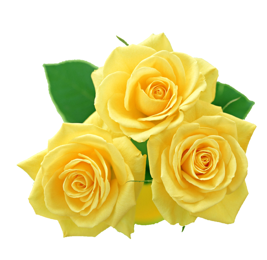 Yellow Rose Clipart - Yellow Rose Clipart