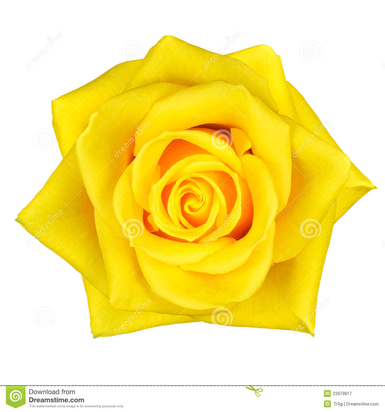 Yellow Rose Images Clip Art B - Yellow Rose Clipart