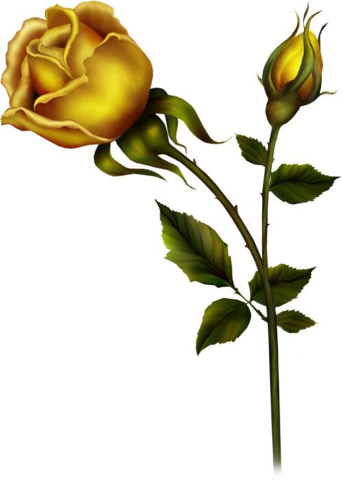 Yellow Rose With Bud PNG Clipart-Yellow Rose with Bud PNG Clipart-16