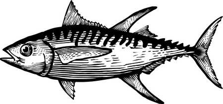 Yellowfin Tuna Clip Art | Tuna Clipart Of a yellow fin tuna | airbrush art/canvas art | Pinterest | Black and white drawing, Search and Yellow