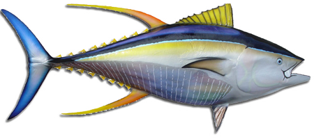 Yellowfin Tuna Clipart-Yellowfin Tuna Clipart-15