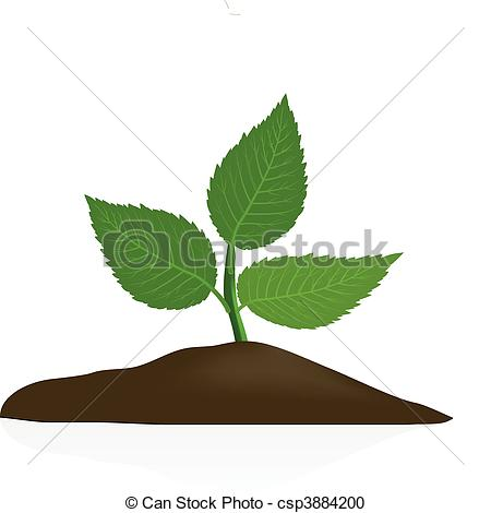 ... Young plant in dark soil isolated on white background