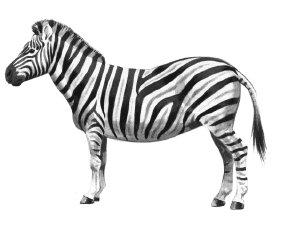 zebra-1 - Zebra Clip Art