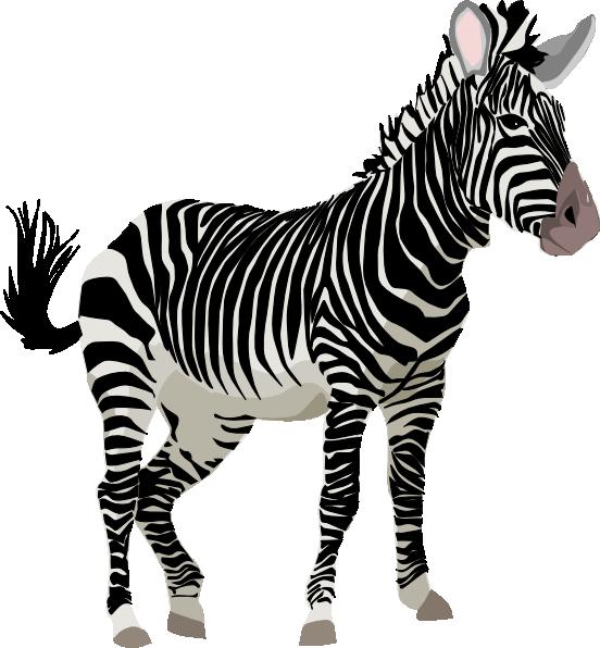 zebra clipart-zebra clipart-5