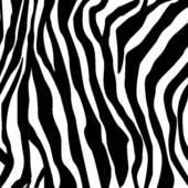 Zebra Print-Zebra print-17